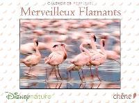 Merveilleux flamants : calendrier perpétuel