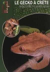 Le gecko à crête de Nouvelle-Calédonie : Rhacodactylus ciliatus