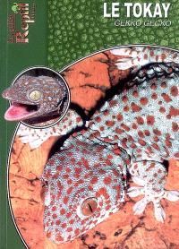 Le tokay : Gekko gecko