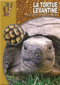 La tortue levantine : Testudo graeca ibera