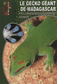 Le gecko géant de Madagascar : Phelsuma madagascariensis grandis