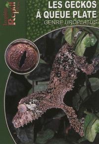 Les geckos à queue plate : le genre Uroplatus