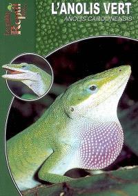 L'anolis vert : Anolis carolinensis