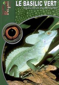 Le basilic vert : Basiliscus plumifrons