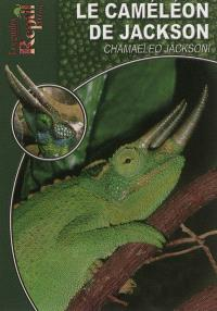 Le caméléon de jackson : Chamaeleo jacksonii