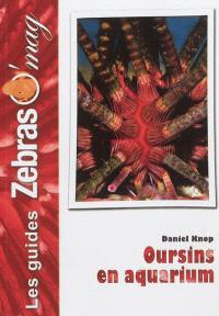 Oursins en aquarium