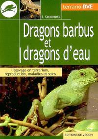 Dragons barbus et dragons d'eau