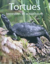Tortues : terrestres et aquatiques
