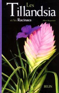 Les tillandsia et les racinaea