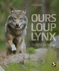 Ours, loup, lynx : ils sont de retour