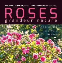 Roses grandeur nature : la collection des roses Loubert