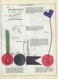 Biologia grafica : extrait