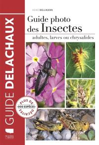 Guide photo des insectes : adultes, larves ou chrysalides