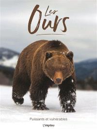 Les ours : puissants et vulnérables